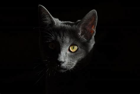 Create A Warrior Cat Based On Yourself!